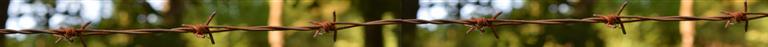 separador selva.png