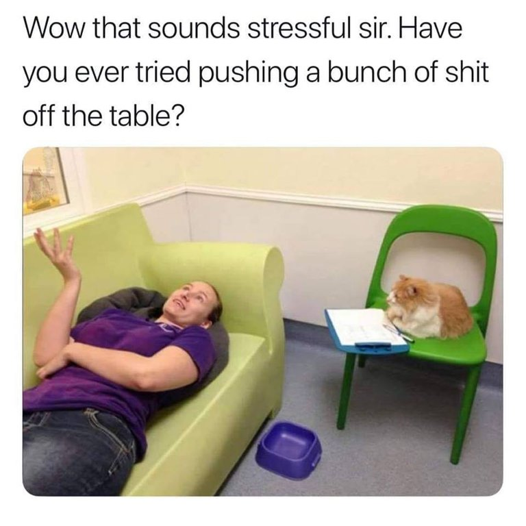 cat therapy.jpg