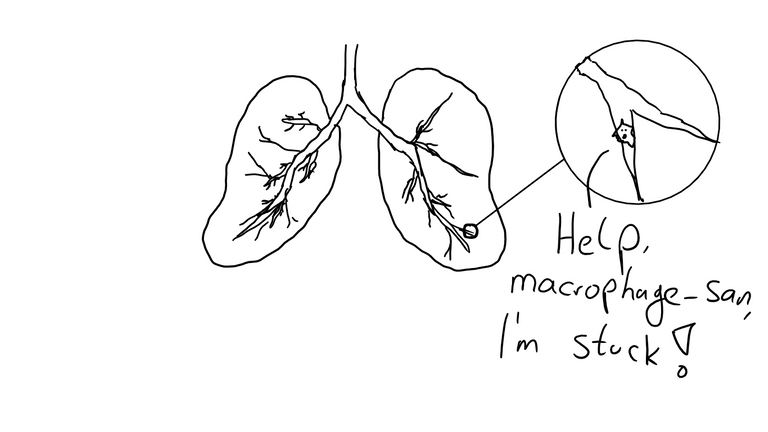 Macrophage san.png