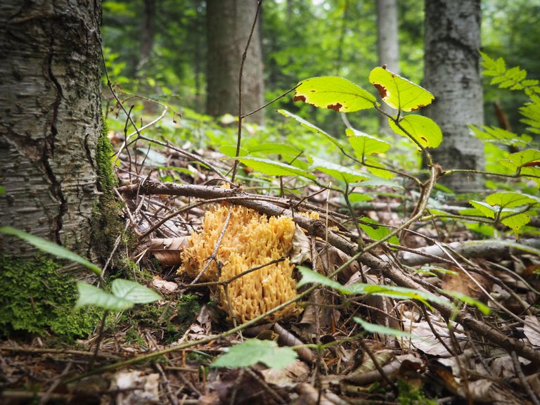 спогади про ліс 10.JPG