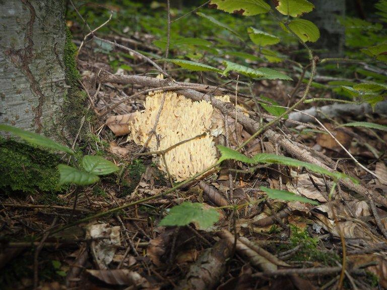 спогади про ліс 9.JPG