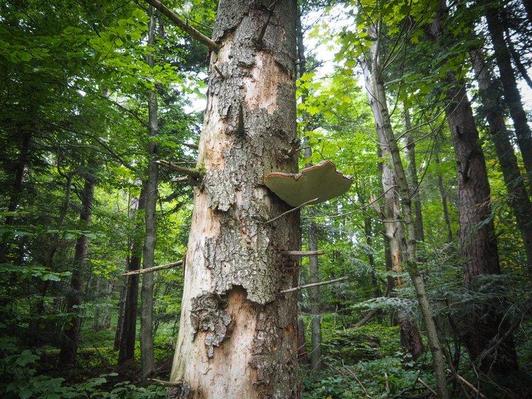 спогади про ліс 5.JPG
