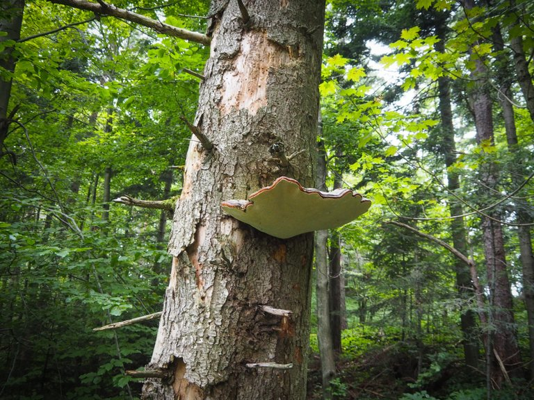 спогади про ліс 4.JPG