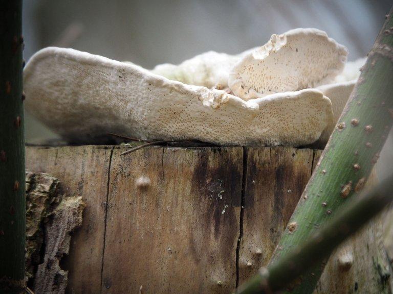 гриб на пеньочку 2.jpg