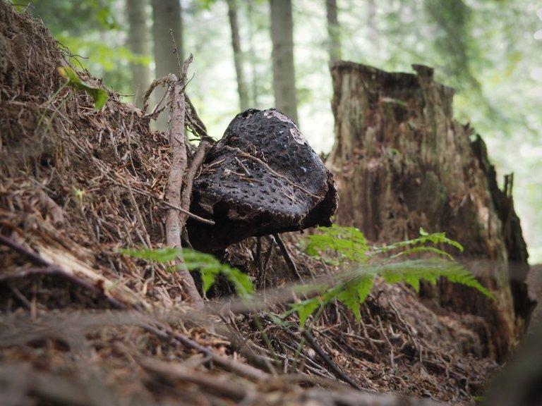 спогади про ліс 8.JPG