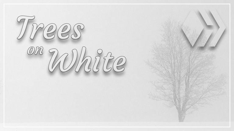 Trees on White