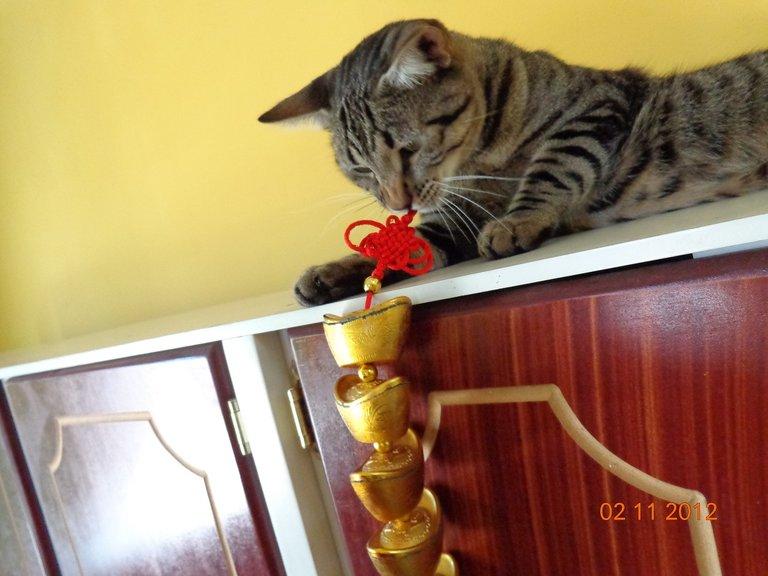 gato gris juguete.jpg