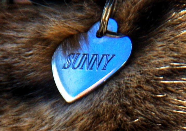Sunny's pendant |🇮🇹 Il ciondolo di Sunny