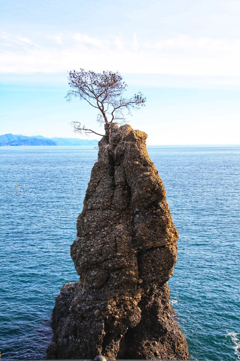 Tree on cliff...