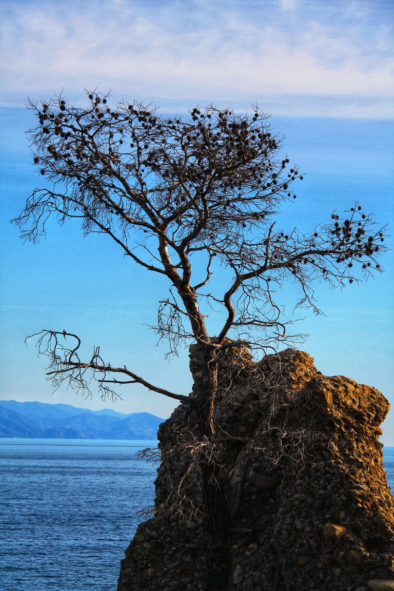 Tree on a cliff...
