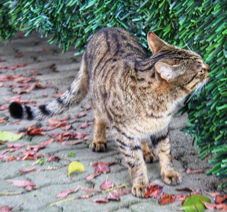 Cat sniffing, showing disinterest...
