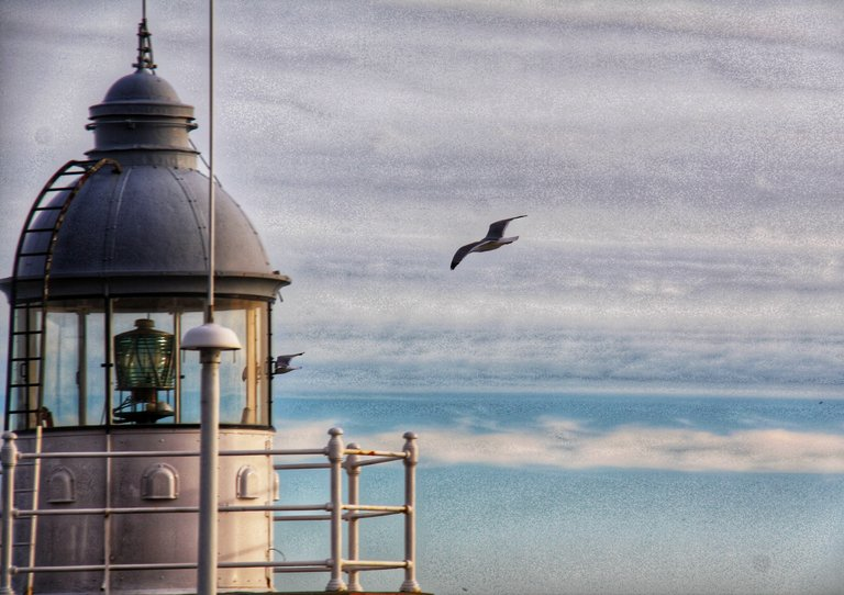 Seagull and lighthouse...