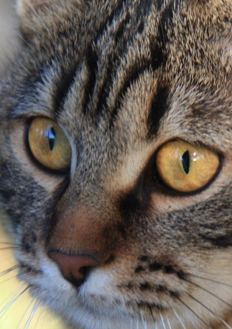 Sunny focused on Stella