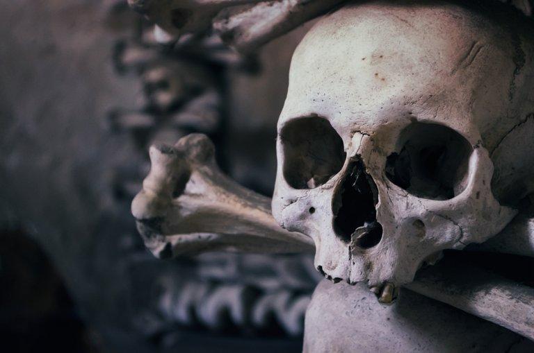 skull726253.jpg