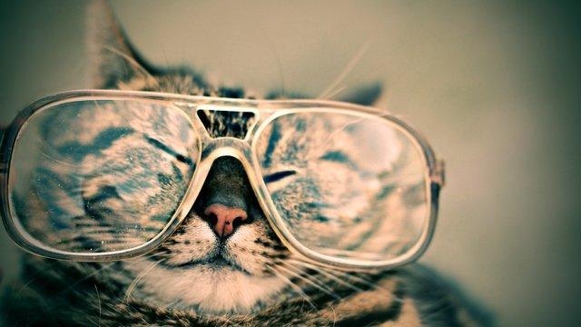 cat984097_1920.jpg