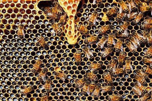 Source: https://pixabay.com/photos/beehive-bees-honeycomb-honey-bee-337695/