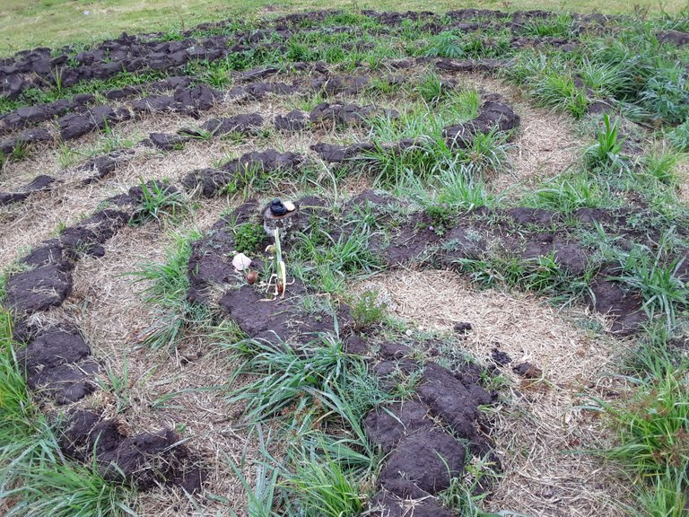 Labyrinth in the process of being carved out of the soil