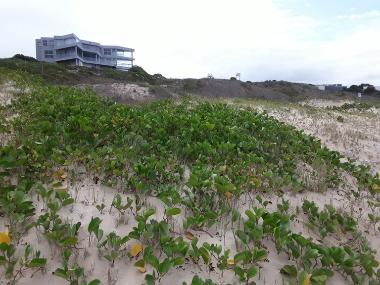 Curious mansions on the beachfront on Robberg beach