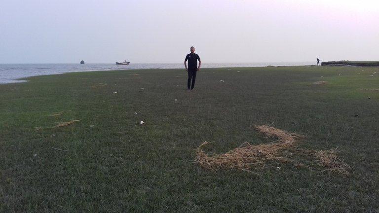 Green grass field..