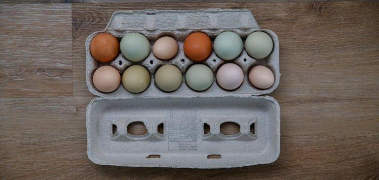 EggCarton.jpg