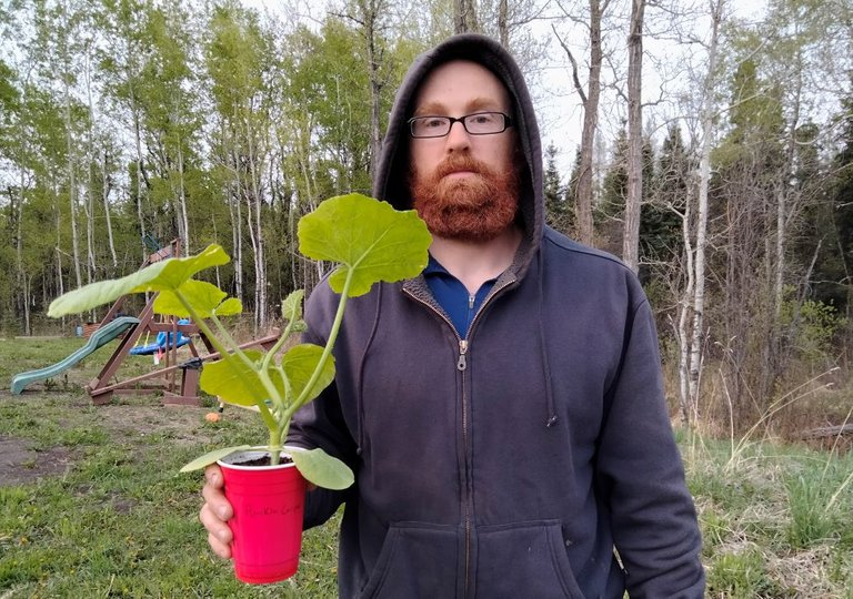 Pumpkin Plant.JPG