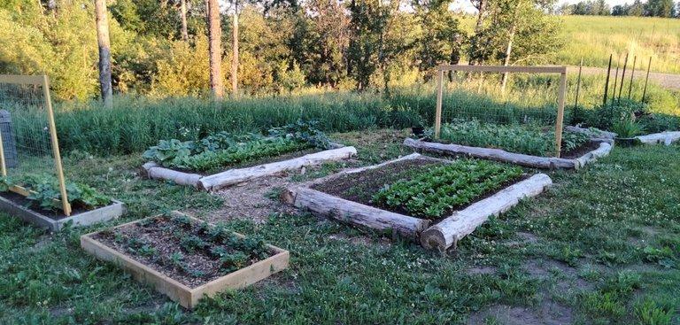 Garden After a few weeks.JPG