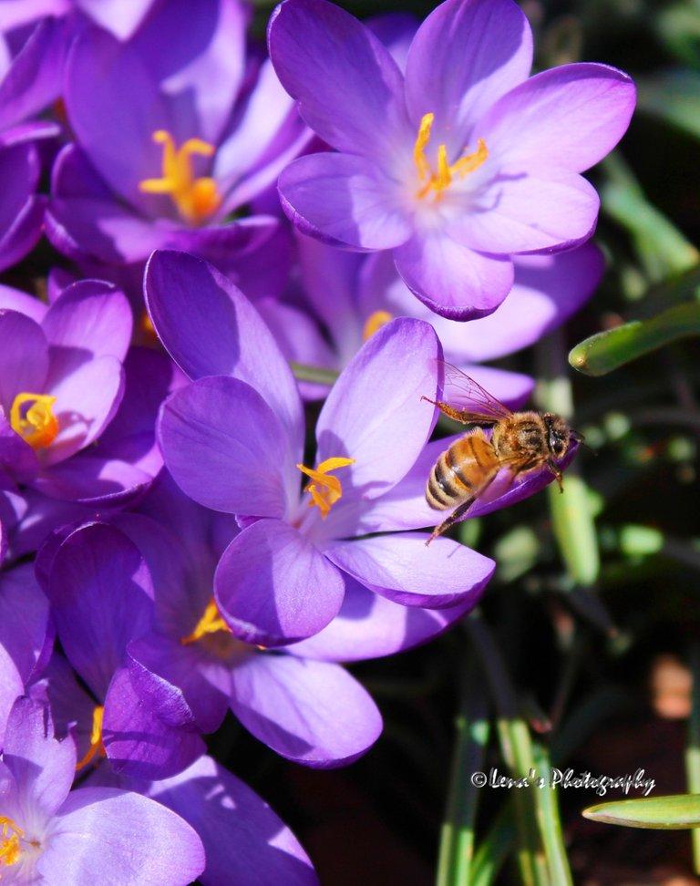 1 bee.jpg