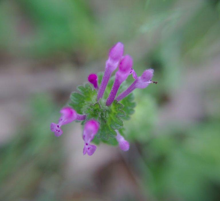 flower attachment.jpg