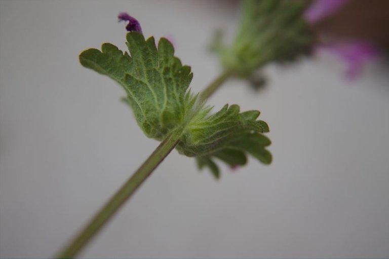 leaf attach.jpg