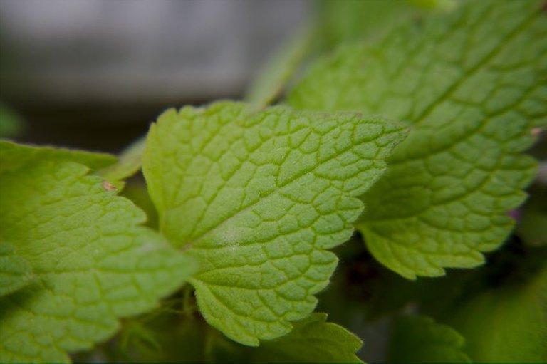 leaf shape.jpg