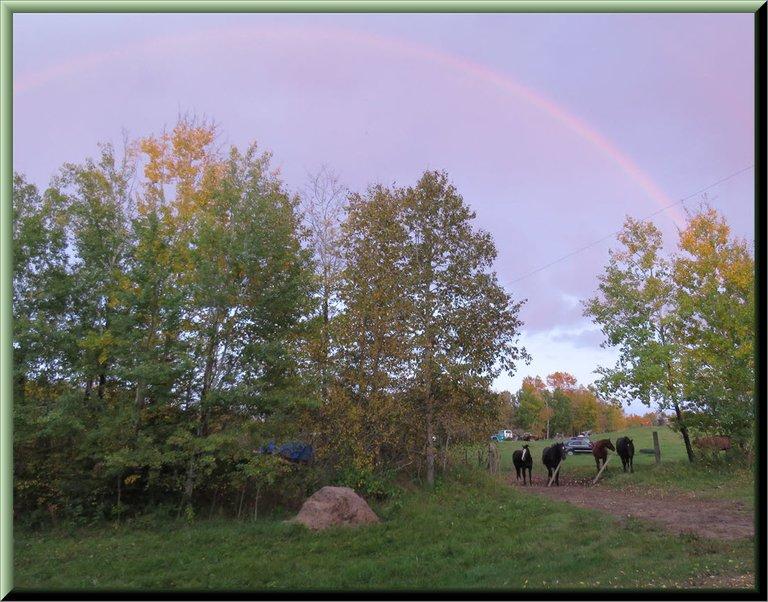 Jeremys horses at gate under the rainbow at sunset framed.JPG