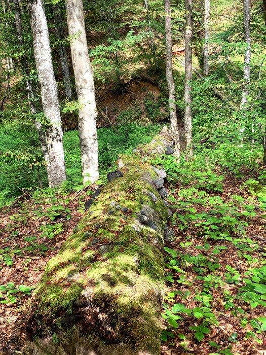 Zejście z Szerokich Wierchów do Ustrzyk Górnych