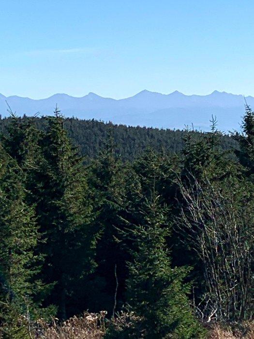Widok na Tatry ze szlaku na Przełęcz Zubrzycką