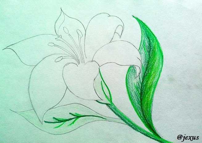 07-Flor.jpg