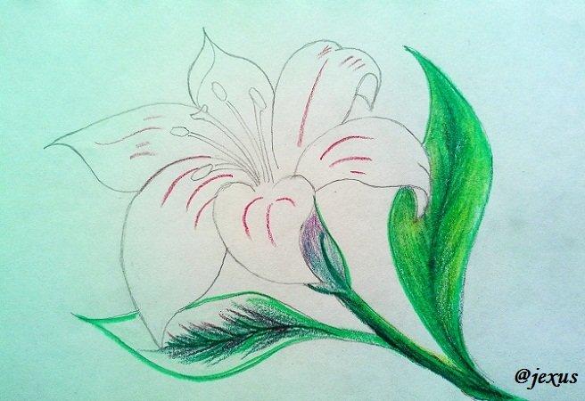 08-Flor.jpg