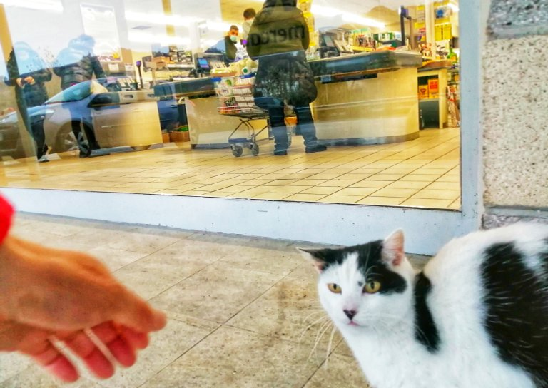 Cat outside the supermarket...