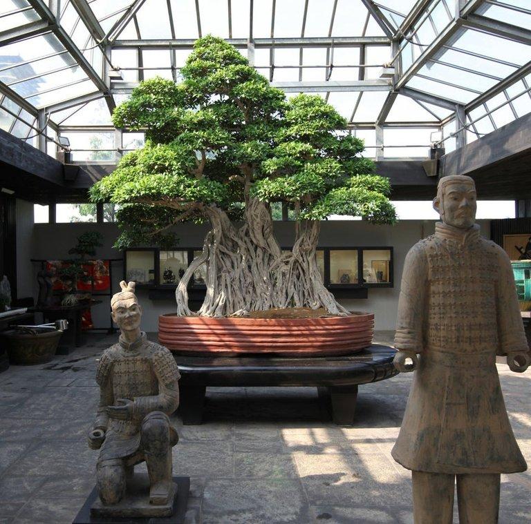 07.bonsaipiuvecchio.jpg