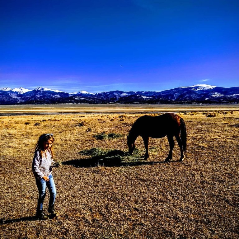 my granddaughter with horse.jpg