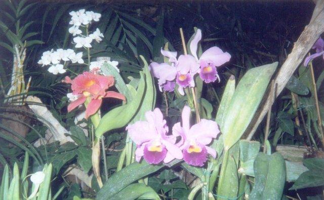 Loro Parque orquídeas.jpg