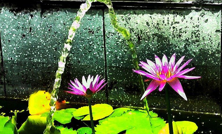 flower_152u.jpg