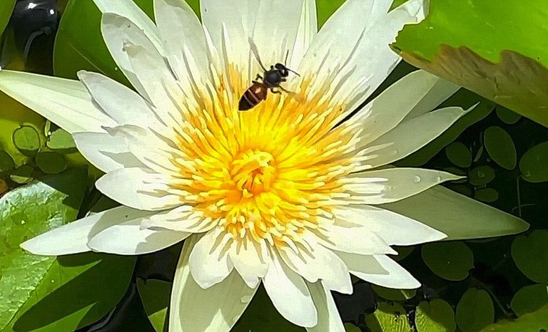 flower_137u.jpg