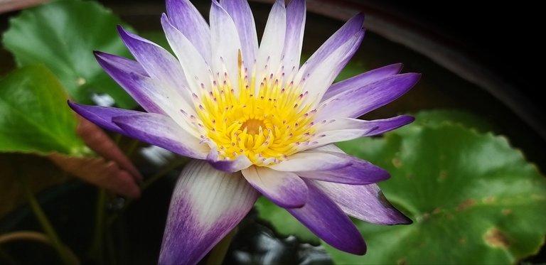 flower_125u.jpg