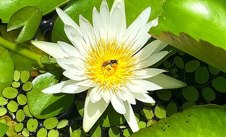 flower_129u.jpg
