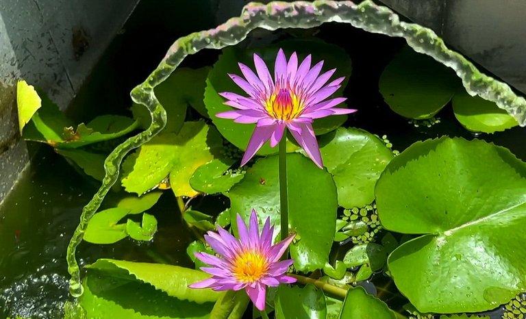 flower_130u.jpg
