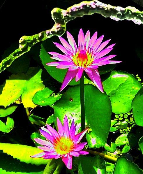 flower_160u.jpg