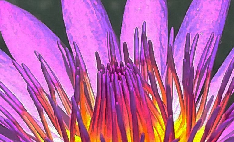 flower_131u.jpg