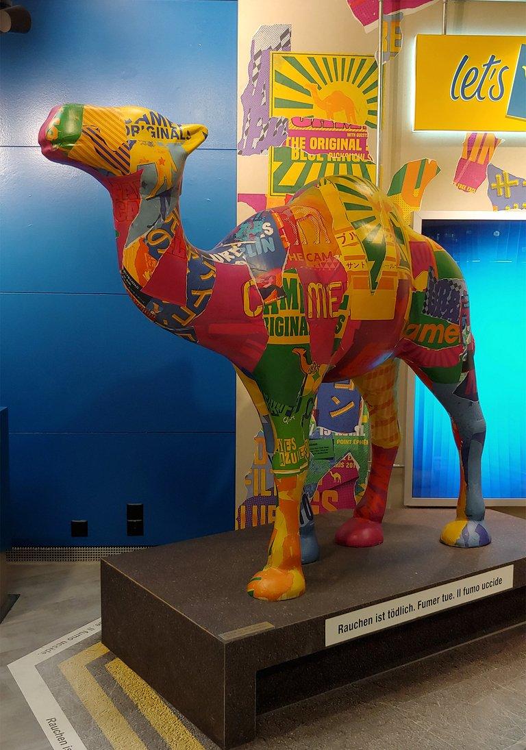 stu12_camel.jpg