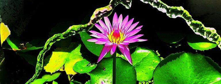 flower_147u.jpg
