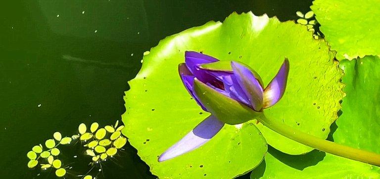 flower_140u.jpg