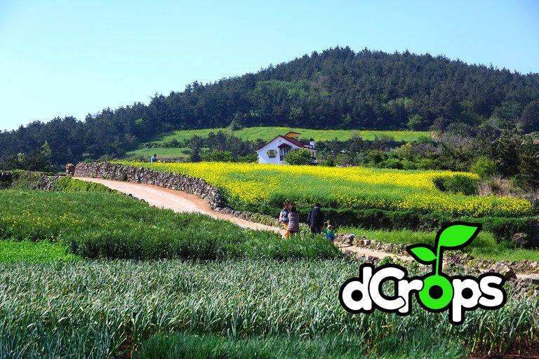 farm_spring.jpg